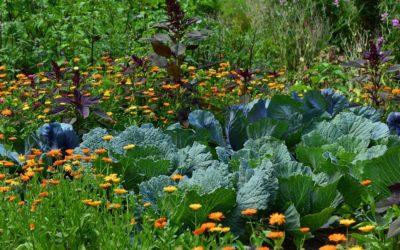 Guide: Slik gror du grønnsaker i din egen hage